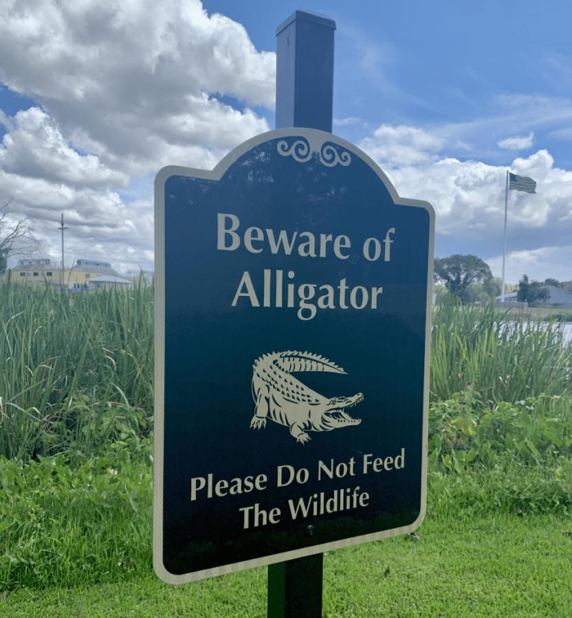 Beware+of+Alligator+signs+now+on+NSU+campus